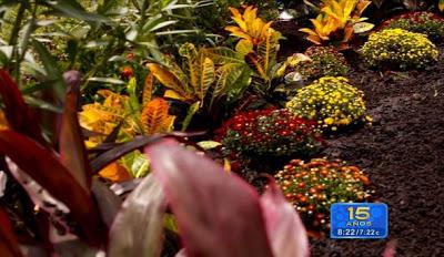 plantas-y-flores-de-la_590x3421