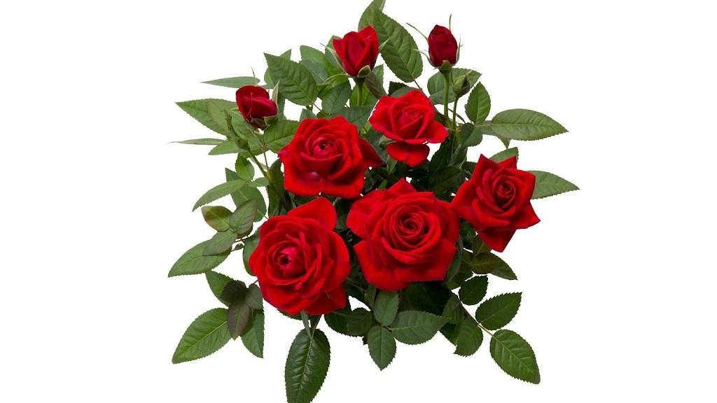 Image Gallery las planta rosa