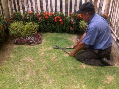trabajos-de-jardineria-economicos_1