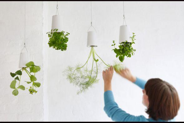 Ideas cuidado de plantas for Como evitar que salga hierba en el jardin