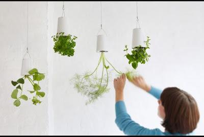 jardines-colgantes-en-tu-casa-3_590x3951