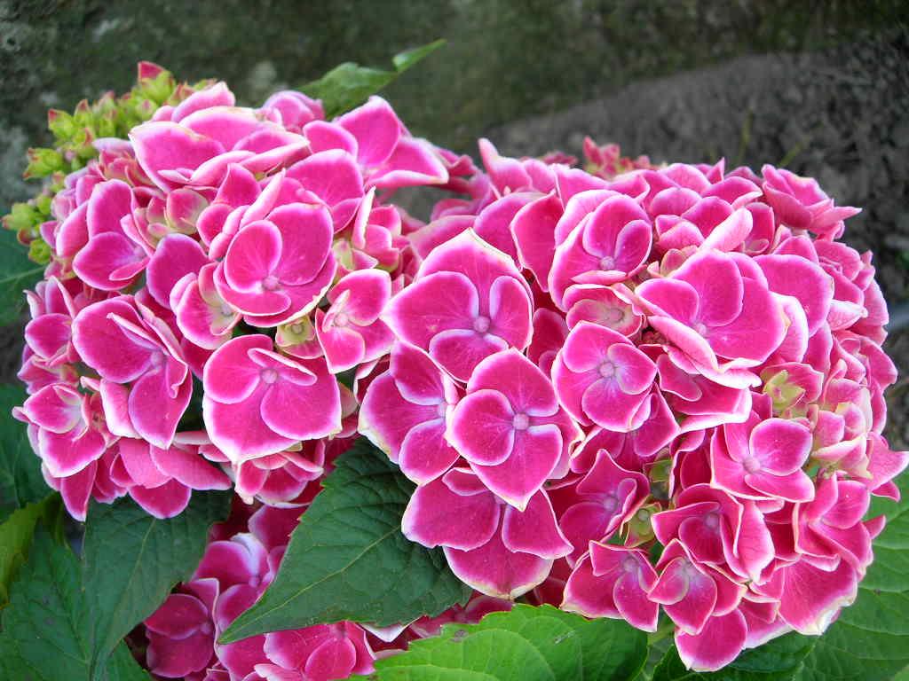 Plantas y Flores para áreas semi oscuras | Cuidado de Plantas