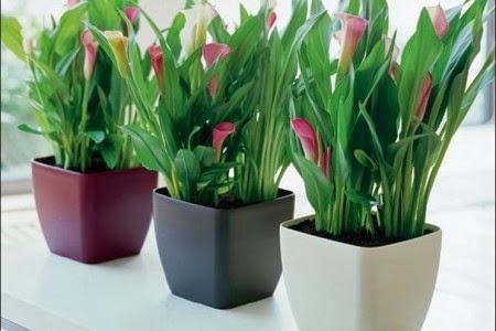 consejos-jardineras-1