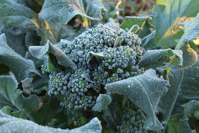 heladas-plantas-jardin-huerto