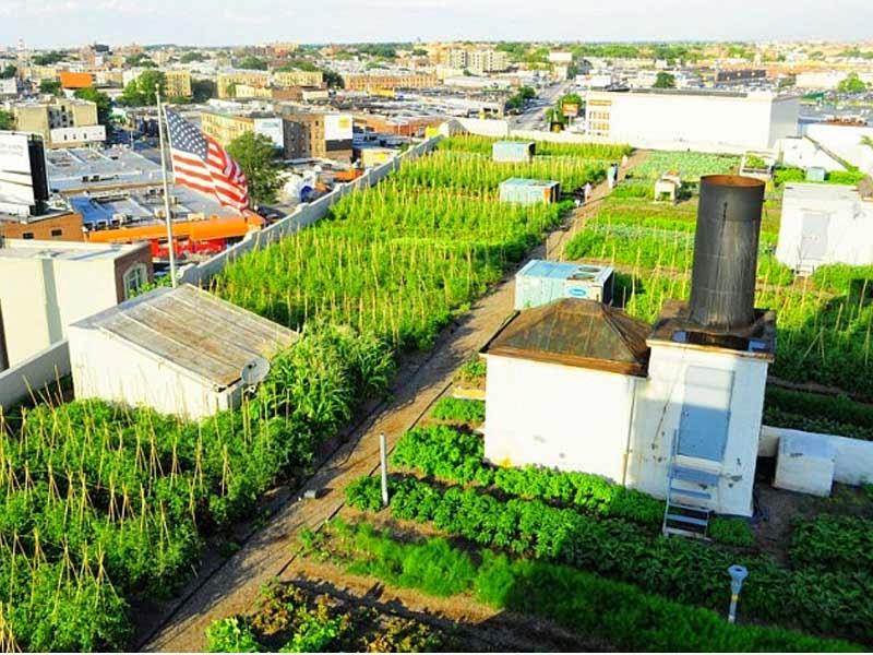fotos de jardins urbanos : fotos de jardins urbanos:de cocción se puede pedir? Hay un montón de diferentes tipos de