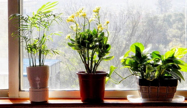 plantas_septiembre02